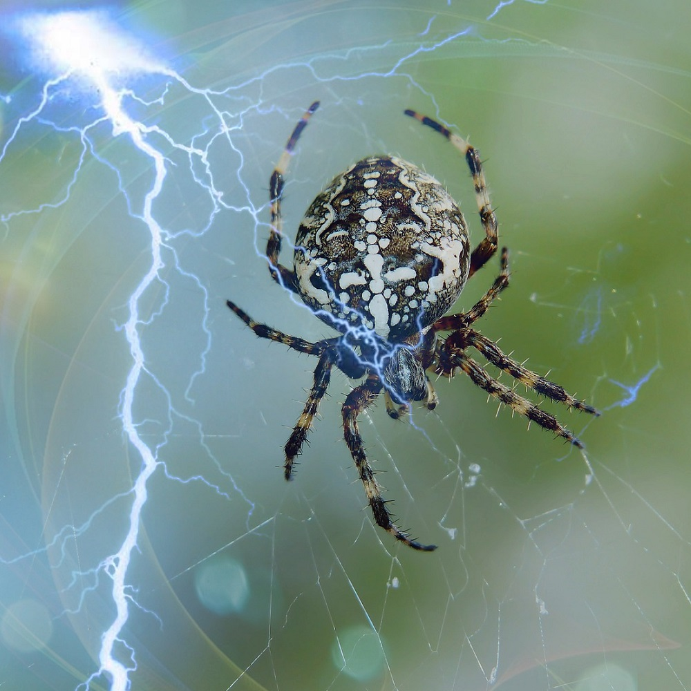 Large spider. Reduce your fear or phobia of spiders, flying, exams and more with hypnotherapy